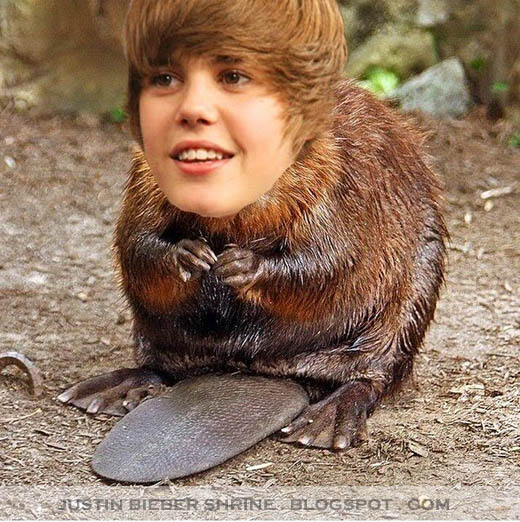 justin bieber funny. funny justin bieber gif. funny