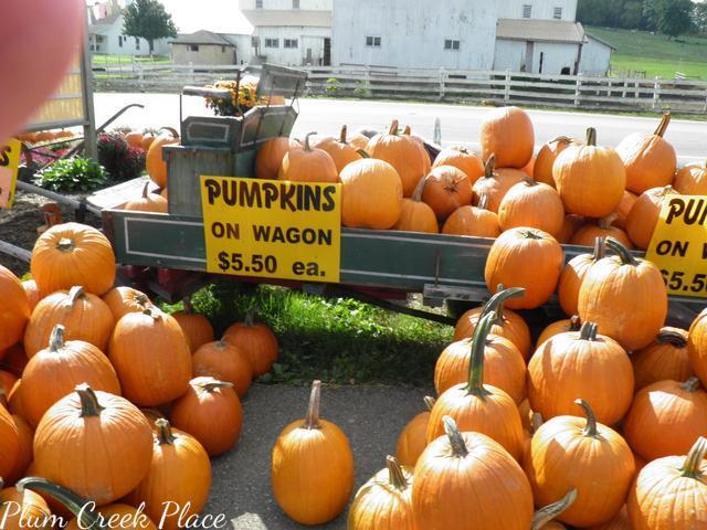 pumpkins, pumpkin wagon
