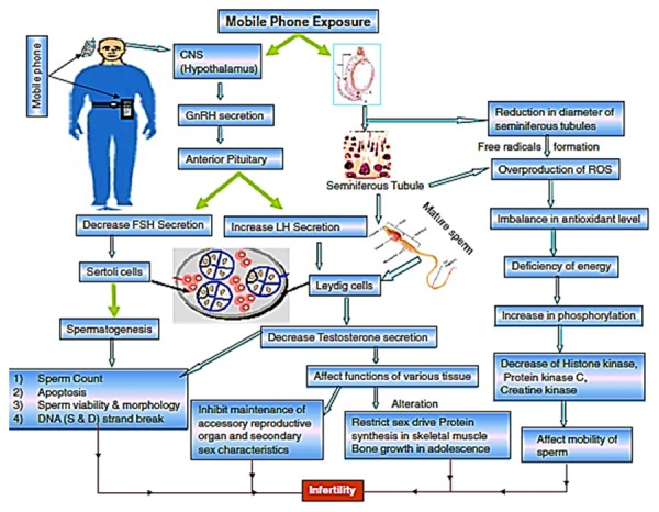 Ford Mobile Al >> Electromagnetic Radiation Safety: Effect of Mobile Phones on Sperm Quality