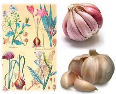 How to Use Garlic Against Stress and Toxins for a Better Mood