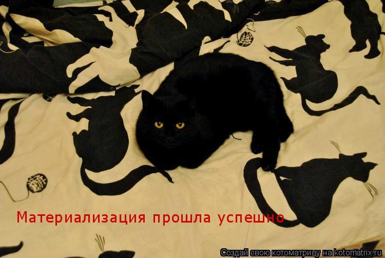Коты случаются 09