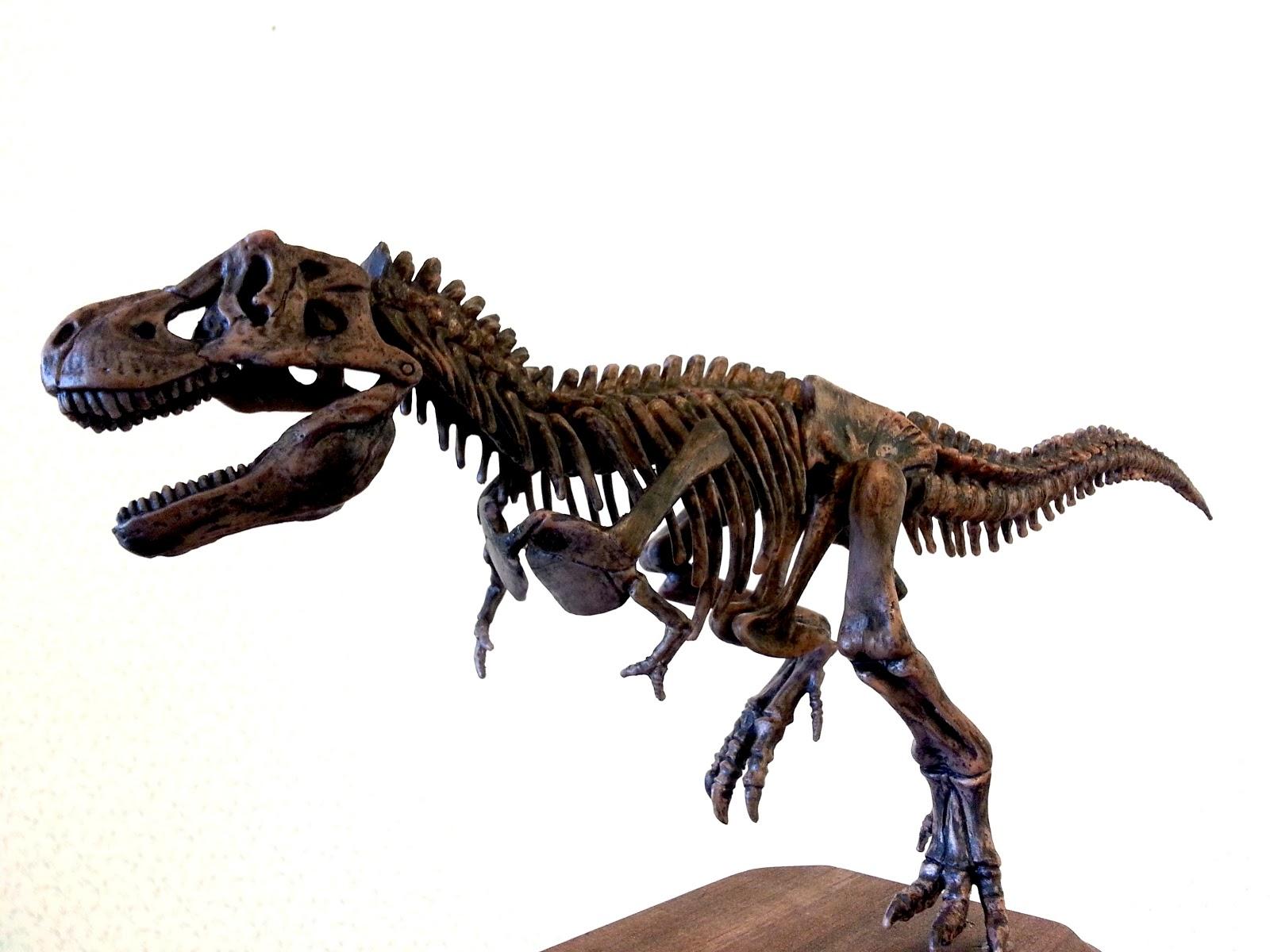 Tyrannosaurus rex skeleton male models picture for Tyranosaurus rex