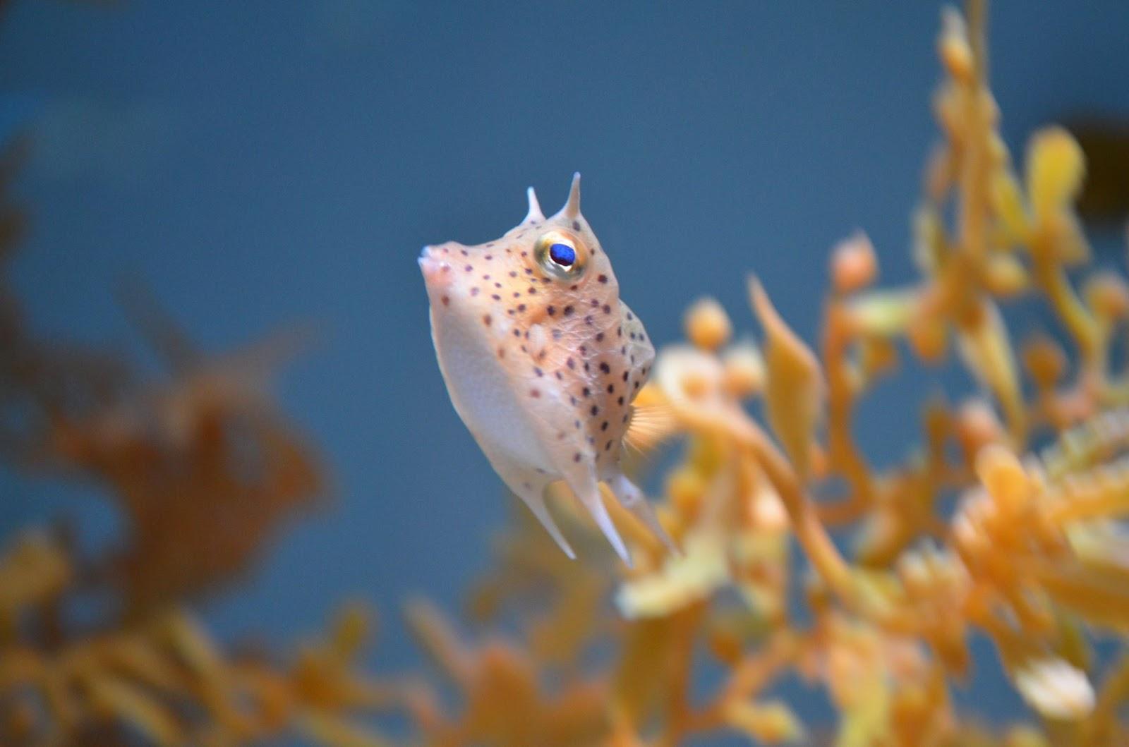 Exhibit galleries blog for Fry baby fish