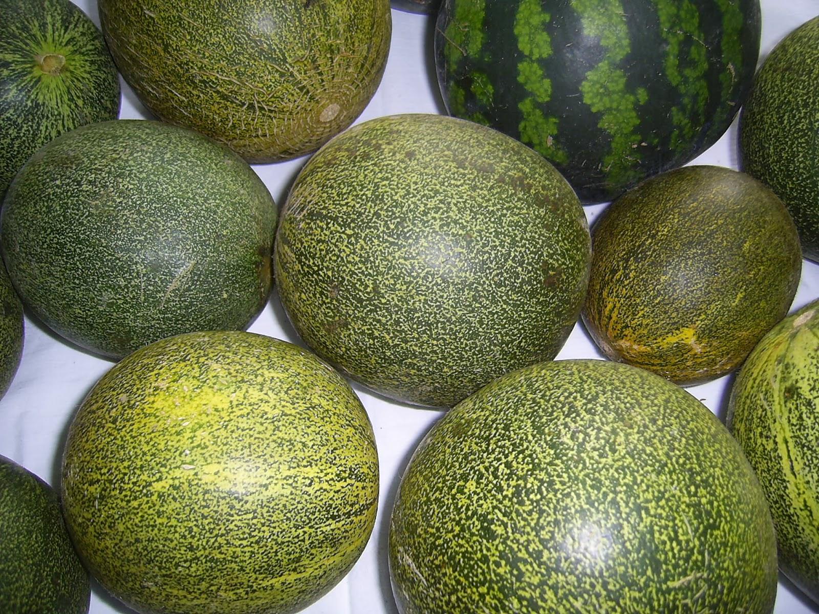 Самые вкусные сорта дыни