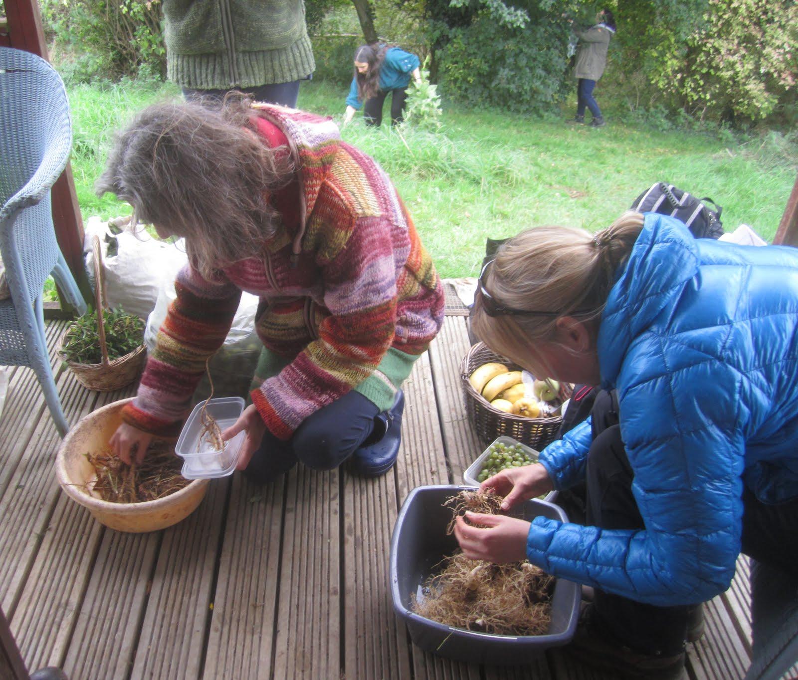 Preparing roots