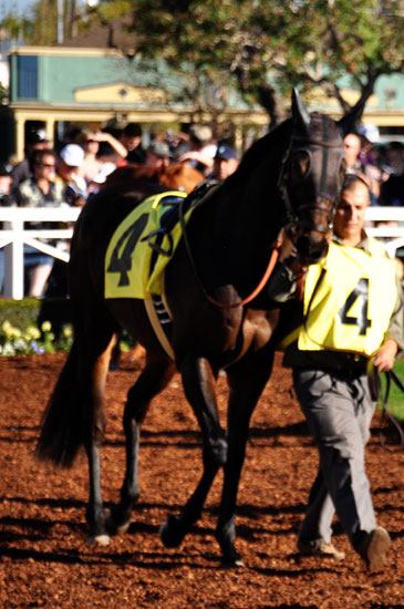 Santa Anita racetrack by Lady by Choice