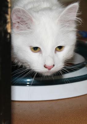 Misja kissa
