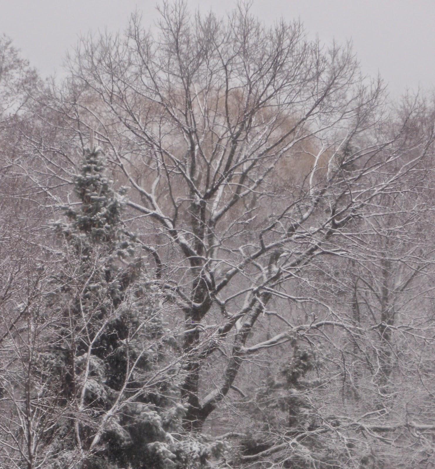 Spring snow, April 15 2014.