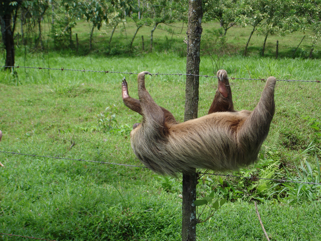 Sloth Animals Funny Pictures