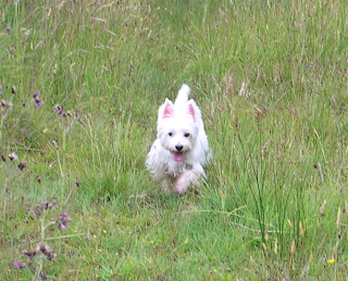 Jessa, my West Highland White Terrier (who I have had since she was a puppy), in 2009