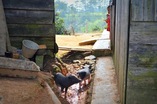 деревни Вьетнама. интересные факты про Вьетнам