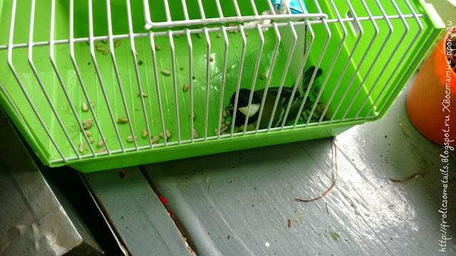 поймала синицу, живоловушка для птиц