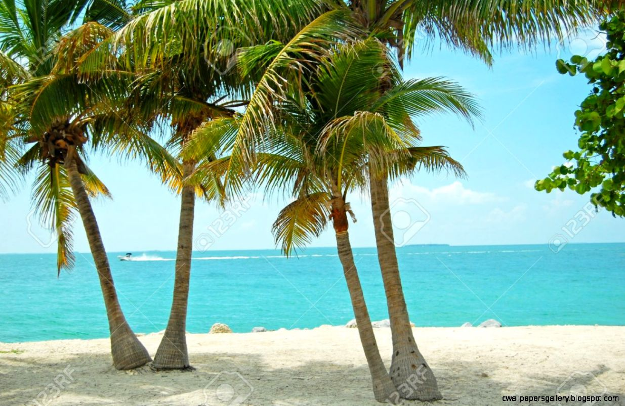 View Out To Sea Between Palm Trees On Tropical Beach Stock Photo