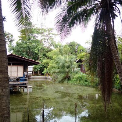 Thailand Zashnain