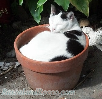 Rascal andd Rocco: Grow a Cat from a Pot