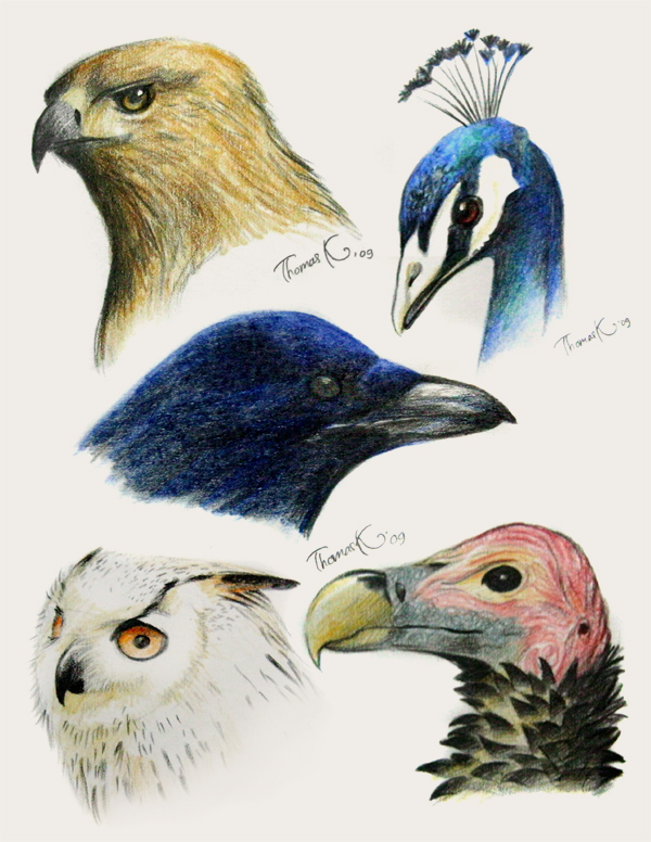 Drawing Birds title=