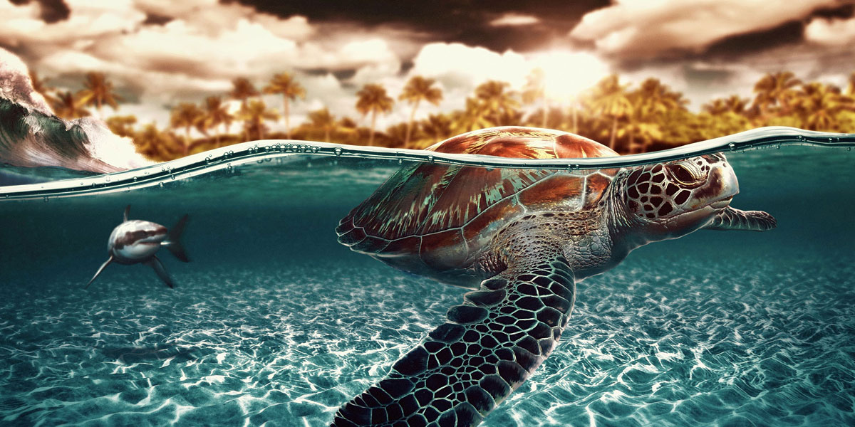 Turtles Sharks l 300+ Muhteşem HD Twitter Kapak Fotoğrafları