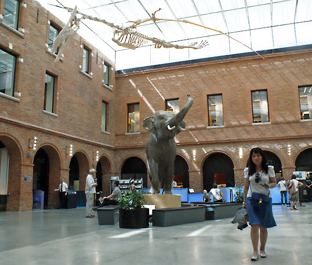 museo+de+historia+natural+de+toulouse