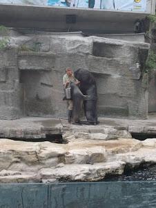 Sea Lion show at Shoenbrunn zoo.