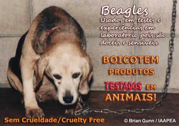 beagle cruelty free