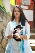 Anushka with Puppy at Blue Cross Pet Carnival Press meet-thumbnail-17