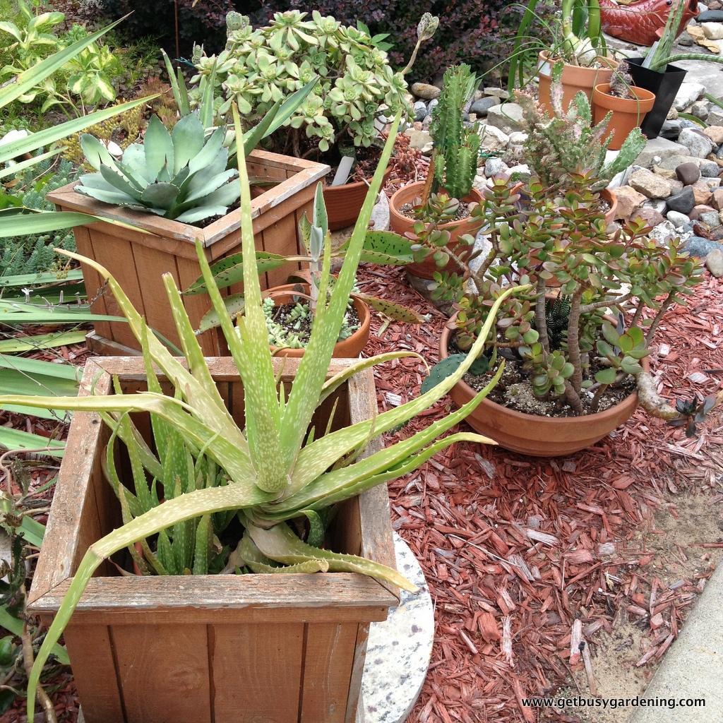 Diy succulent potting soil for Soil for succulents