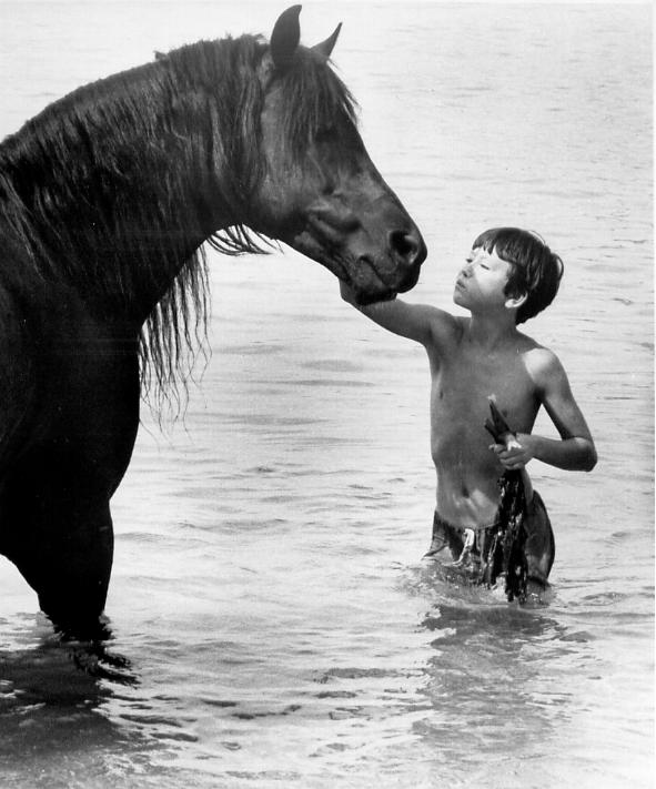 فيلم الحصان البري