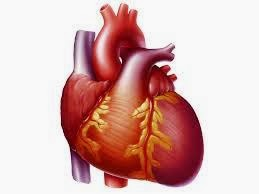 Healthy Food Help To Decrease The Risk Of Heart Disease