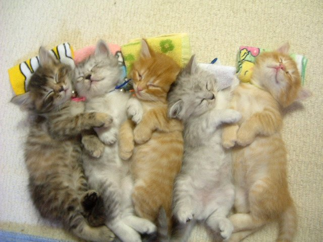 Yang ini baru namanya anak kucing lucu . lucu-lucu yah anak kucing