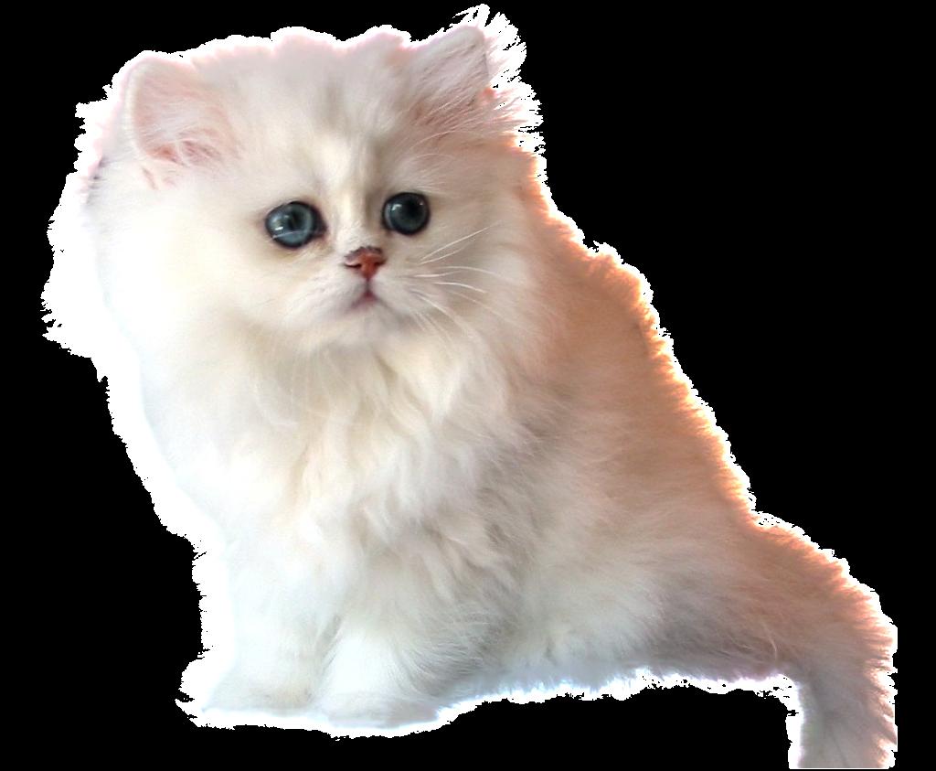 El f nix lector literigato 1 zafiro for Red transparente para gatos