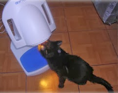 leczenie kota