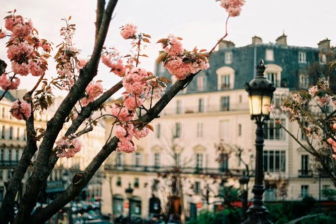 Inspiración rosa París