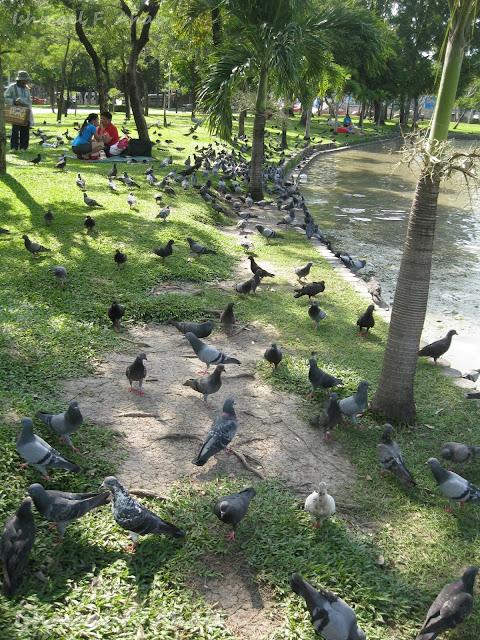 Pigeons in Chatuchak Park