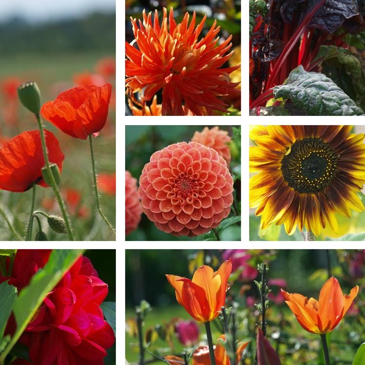 Blomster i stærke og varme farver giver haven energi og kræver opmærksomhed