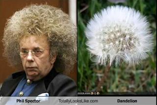 funny hair dandelon