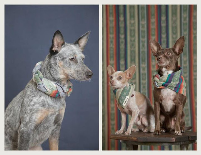 cachorros com lenço no pescoço