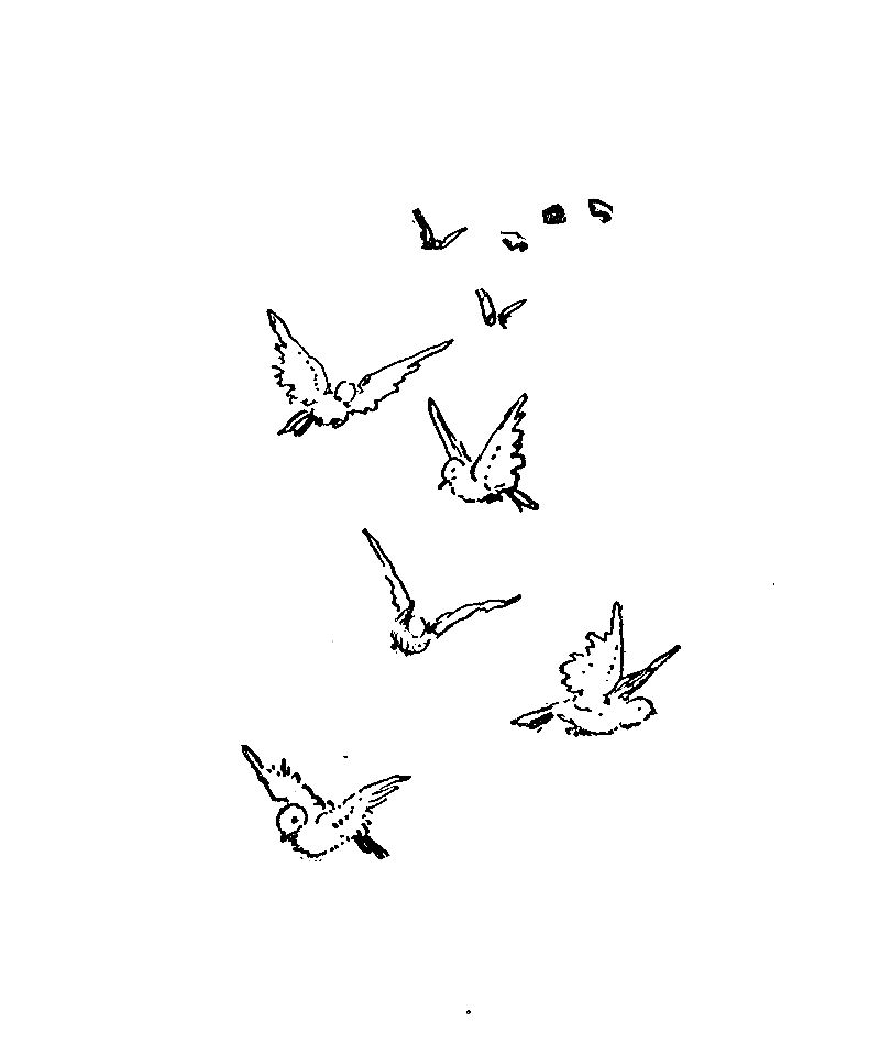 Simple bird drawing flying - photo#3