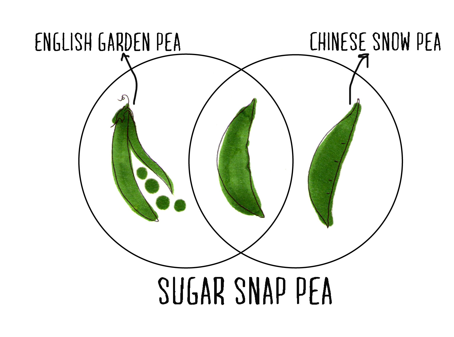 how to cook sugar snap peas in the pod