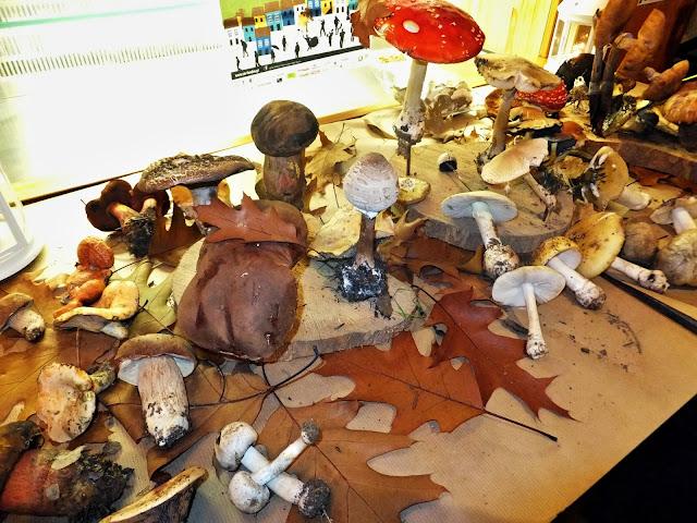 Os Cogumelos em Alcaide - reservarecomendada.blogspot.pt