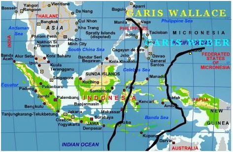 Gambar 2.3 Peta Persebaran Fauna Indonesia berdasarkan Garis Wallace ...