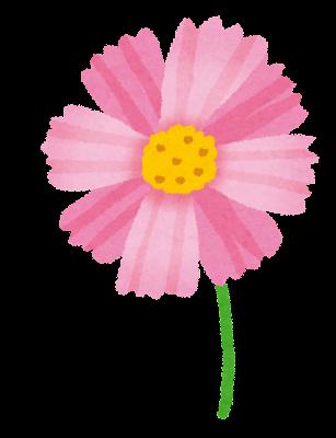コスモスのイラスト(花)