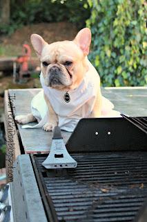 A french bulldog shows humor on a dog blog through a series of photographs depicting a backyard barbecue scenario.
