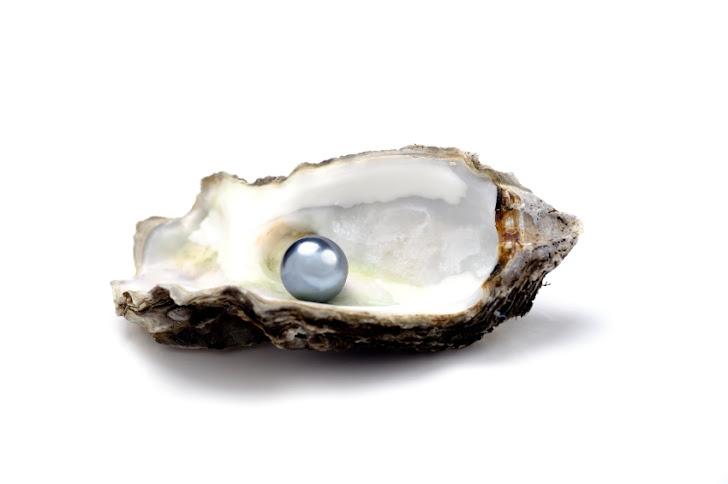 Coastal Oyster