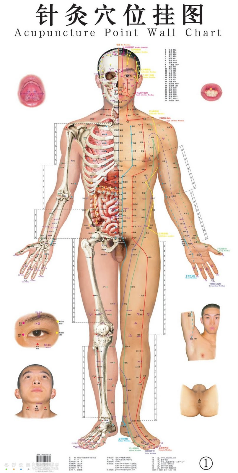 Acupuncture masters how an acupuncture point diagram helps acupuncture was exposed in prehistoric figurines extra than 3000 living ago this performance truly involves stabbing bony ringing needles hooked on skin ccuart Image collections