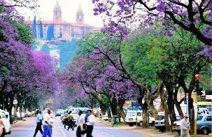 Árboles urbanos y sus servicios ambientales