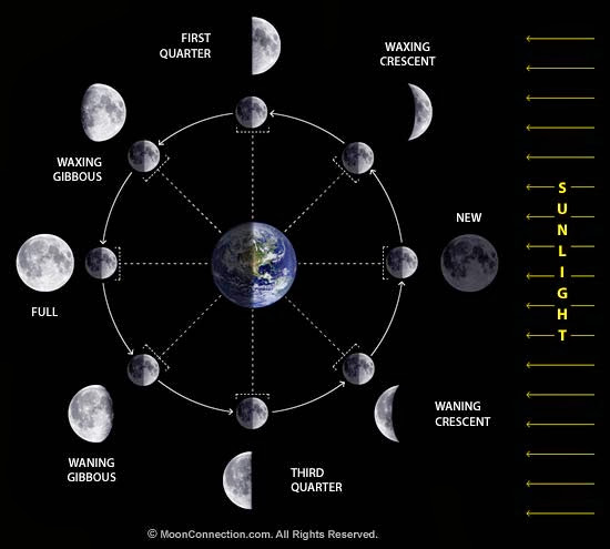A chart of the moon and all its phases