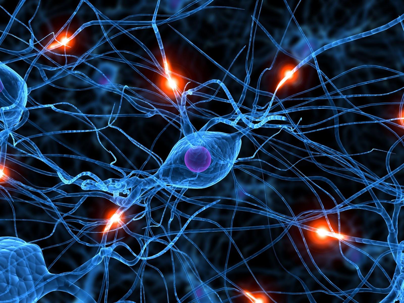 Los 6 est mulos que activan el cerebro reptil son la base for Neurones miroir
