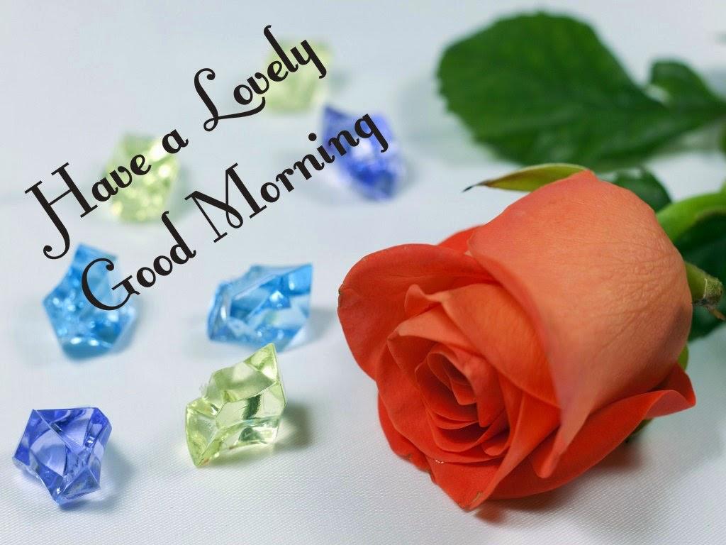 Good Morning Beautiful Red Rose Image : Beautiful red rose good morning photos imaages festival