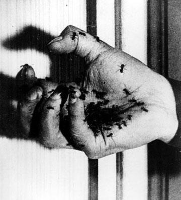 HISTORIAS DE HORMIGAS: Las hormigas mutantes de Salvador Dalí