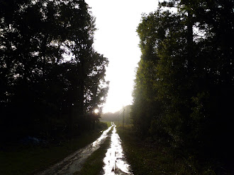 Early morning country road